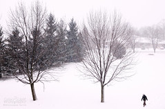 The white rain (Neerod [ www.colorandlightphotography.com ]) Tags: trees winter snow toronto cold landscape horizon shape