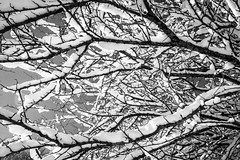 The Ascent - 02 (FCicconardi) Tags: snow nature details blacknwhite aurunci redentore cicconardi seebw