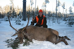 Red Deer Hunting In Estonia