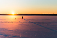 On the Ice (dennisdasfoto) Tags: schnee winter sunset lake snow ice dogs silhouette is vinter shadows sonnenuntergang sundown sweden schweden sverige eis schatten sn hunde vnern solnedgng sj hundar kristinehamn skuggor marieberg insj dt50mmf18sam