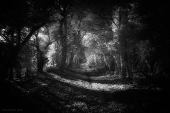 returning (Jon Downs) Tags: trees light bw white black tree art digital canon downs landscape ir photography eos photo jon flickr artist photographer image path picture pic photograph return infrared wiltshire footpath returning avebury publicfootpath 400d jondowns highesthonor