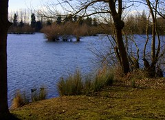 Sunday afternoon at Thrupp Lake (Maggie @ Abingdon) Tags: winter landscape radleylakes thrupplake earthtrust