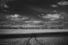 casting a long shadow (Jon Downs) Tags: trees light shadow red sky bw cloud white black tree art field clouds digital canon downs landscape ir photography eos photo jon flickr track artist photographer shadows image tracks picture pic photograph crop wiltshire infra avebury 400d jondowns