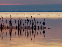 Anochece en La Albufera (I) (.Bambo.) Tags: sunset lake water lago atardecer agua puestadesol ocaso laalbufera