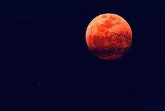 looked out the window and saw the bloody moon (a5if) Tags: red orange moon snow colour silhouette full dhaka bloody bangladesh asif redmoon yousuf ibne a666if asifibneyousuf