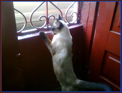 She is watching the street from the balcony :)