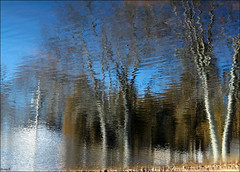 BLUE SKY AND TREES (Sheba53) Tags: blue trees sky nature water grass pond bluewater bluesky ripples waterreflection waterreflections pondreflection waterripples pondreflections johnstonri johnstonwarmemorialpark