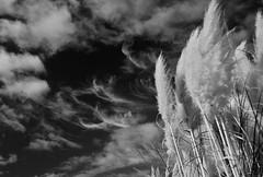 Pinceladas no céu (Carla Robalo Martins) Tags: sky bw portugal beautiful clouds lisboa sintra pb céu showroom nuvens soe visualart canas travelogue wearetheworld polarize mercês wonderworld polarizador wonderfulworld top20blackandwhite welcometoparadise baldio webfoot tistheseasontobejolly topshots naturesgarden flickrhearts agradephoto visõesdanatureza heartawards ultimategold platinumheartaward wonderfulshots wildlifecontest wonderfulphotosfortheworld vftw wetraveltheworld thisiswhyilovephotography simplysuperb goldstaraward tlcphotography arealgem unafotoperunireilmondo todosporlapaz vanagram umbralaward feelingroup micarttttworldphotographyawards viagenselocaisinesquecíveis whatyouseeiswhatyouare lovelylovelyphoto unbelievablepics toma15 updatecollection universeofnature wooooowgroup mygearandme flickraroundtheworld unpuñadodeamigos unafotosolidaria lacasadinadiavalerio yourbestphotosonflickr piccieshare welcomealltheartists