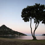 Tairua tree