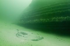 Torpedo Ray (Shure Media) Tags: divers marine media underwater massachusetts bank shipwreck national gloucester ann cape patriot sanctuary shure stellwagen stellwagenbank 2013 photocontestneoo