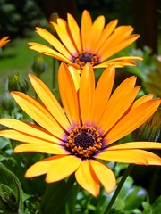 . (sdove9) Tags: mayflowers