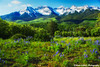 Lupines in Springtime (Aspenbreeze) Tags: flowers mountains rural colorado country wildflowers springtime sanjuanmountains lupines snowypeaks aspenbreeze moonandbackphotography topphotospots tpslandscape gpsetest bevzuerlein mountainsscape coloradowildfflowers