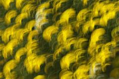Spring (DavidFrutos) Tags: longexposure flowers bw flores flower primavera daisies spring flor explore murcia filter le daisy margarita canondslr margaritas filtro largaexposición filtros neutraldensity explored gnd8 densidadneutra davidfrutos 5dmarkii