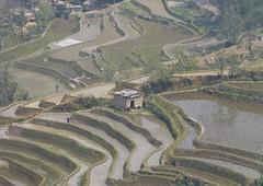 Yunnan  Yuanyang  terrasses de Luopu  (mekong69) Tags: china rice terraces yunnan chine riz rizires yuanyang  terrasses luopu terracedpaddyfields   hnghhnzyzzzhzhu