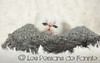 Les Persans de Fannie (Les Persans De Fannie) Tags: cats pets love cat persian chats kitten chat chinchilla bebe animaux naissance fannie tendre chaton chatons calin persan