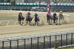 20130405-_DSC4574 (Fomal Haut) Tags: horse japan nikon nagoya 80400mm d4   14teleconverter  d800e