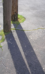 my, what long legs you have (ja cour) Tags: wood shadow green grass sunshine florence afternoon alabama late cracks asphalt telephonepoles chiaroscuro