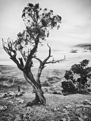 overlook (dawn m. armfield) Tags: arizona bw tree river nationalpark unitedstates grandcanyon canyon southrim desertview omd grandcanyonnationalpark