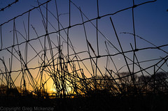 early morning sunrise (The Urban Adventure) Tags: morning grass sunrise 35mm fence countryside nikon bokeh d7000