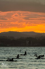 Sunset Surfers (Nolan White) Tags: sunset surf australia queensland surfers coolangatta snapperrocks tweedheads