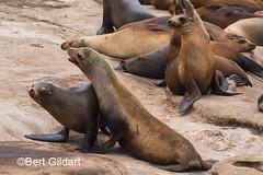 Seals (5 of 35)