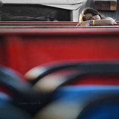 suddesspress '14 (pamo67) Tags: pamo67 trenino train navetta shuttle panche benches ritratto portrait volto face people rosso red blu stop square pasqualemozzillo