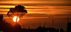 ... lamps in a row ... (wolli s) Tags: flickr italien venedig venezia veneto it venice sun down sundown sonnenuntergang orange silhouette