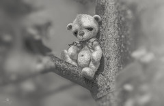 button does not like trees (rockinmonique) Tags: hmbt monochromebokehthursday tiny teddybear small toy monochrome mono bw blackandwhite miniature moniquew canon tamron