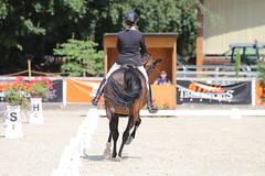 IMG_8088 (dreiwn) Tags: dressage dressur dressuur pferd reitturnier turnierreiten pferdesport horse horseback horseriding equestrian reitverein dressurprfung kandare doublebridle reiten pferde reitplatz ridingarena