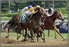 Cavorting wins the Personal Ensign (Spruceton Spook) Tags: saratoga horseracing horses cavorting personalensign javiercastellano