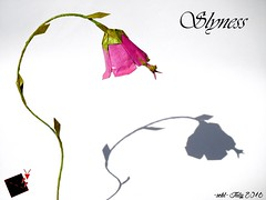 slyness (-sebl-) Tags: origami mantis insect flower mulberry sebl challenge