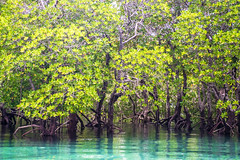 in the mangroves (bocero1977) Tags: landscape pov pempa nature reflection mood outdoor mangroves sea zanzibar trees blue fineart perspective travel foliage tour forrest colors green seascape water sky light