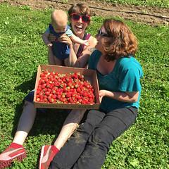 Strawberry picking (elizajanecurtis) Tags: 5months dolesorchard eliza hattie lulu maine mainesummer pyo strawberries strawberrypicking summer