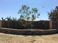 New retaining wall (Anna Sunny Day) Tags: retainingwall yard garden stone wall