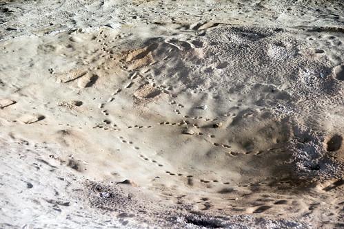 tracks on floor of Cueva Grande