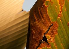 leaf it (fullres) Tags: leaf nature bali bondalem