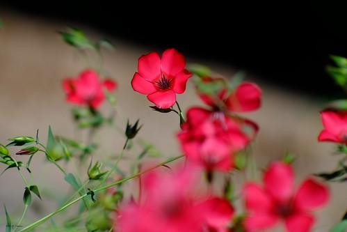 Une fleur à Commercy.
