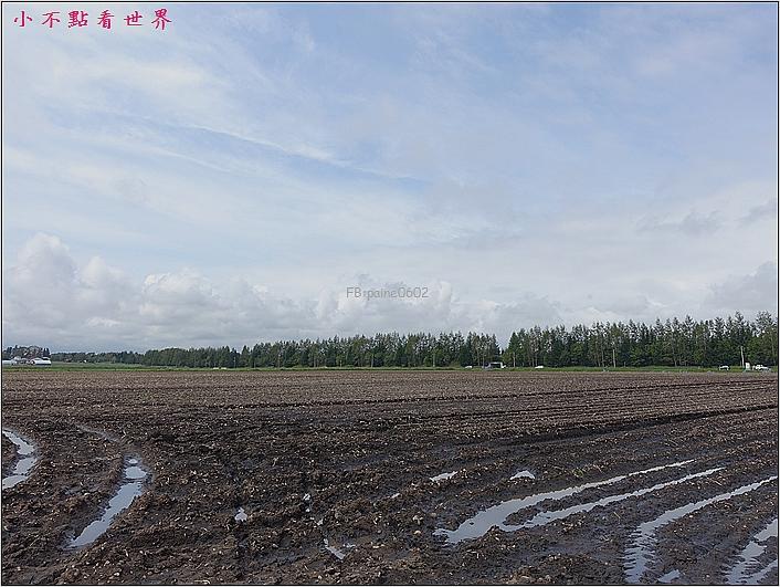 川野農場 DIY採玉米 (13).JPG