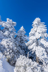 Harry_30834,,,,,,,,,,,,,,,,,,,,,,Hehuan Mountain,Taroko National Park,Snow,Winter (HarryTaiwan) Tags:                      hehuanmountain tarokonationalpark snow winter mountain     harryhuang   taiwan nikon d800 hgf78354ms35hinetnet adobergb