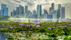 Cityscape (tomquah) Tags: lgg4 g4 singapore artsciencemuseum waterlilies marinabay cbd pond flowers water landscape cityscape hdr anz maybank oue hsbc citi scb lv