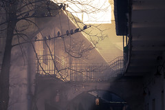 First morning rays... [ Explored ] (Ryskatt) Tags: morning winter haze glow krakow jewish pidgeons rays passage cracow kazimierz canoneos30d krakoff canonef70200f4usm