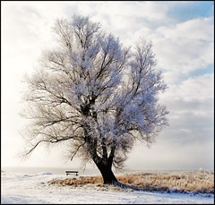 The story of a Tree (Marie Granelli) Tags: winter snow tree bench skne frost explore february sdersltt