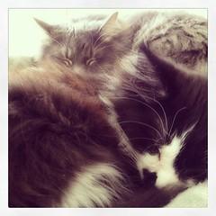 upload (merrickball) Tags: valencia cat square kitten squareformat finnegan stinks iphoneography instagramapp uploaded:by=instagram foursquare:venue=4bd48211637ba593f5ccf470