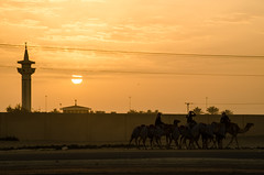 sunset (agmimage) Tags: trip travel viaje people race photo nikon foto desert documentary camel doha qatar documental catar d7000 agmimage blinkagain alvatogalindomartinez sobatech