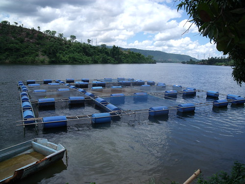 Cage aquaculture in Ghana. Photo by Curtis Lind, 2009.