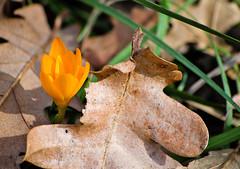 , , ,     (katunchik) Tags: plant nature flora natur bulgaria priroda bulgarie anlage  bulgarien bulharsko primorsko