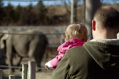 At the zoo (tetedefromage) Tags: baby elephant daddy zoo rhodeisland rogerwilliams