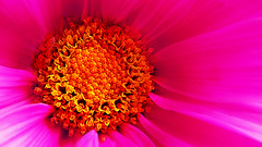 I've got sunshine on a cloudy day... ('pixler') Tags: hello lighting winter sun toronto ontario canada flower macro sunshine photoshop photography march lyrics spring graphics focus warm flickr colours shine image song detroit manipulation record production 1956 greetings blooms fx audio recording blooming digitalarts motown thebigsmoke 2013 artography photographicarts artographx pixler blinkagain bighugz flickrsfinestimages1 ivegotsunshineonacloudyday thetemptations mygirl hitsong