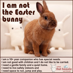 I Am Not The Easter Bunny. (Flat Bonnie & Friends) Tags: rescue pet anime cute rabbit bunny bunnies art love dutch animal japan kids easter children toy toys japanese stuffed mod hare doll soft hand flat graphic designer handmade crafts tail culture craft felt pop retro plush made plushies cotton gift lucky harajuku kawaii indie plushie animation bonnie rabbits collectible etsy lover custom shelter activism fleece adopt bun lapin usagi adoption designers jpop lop designertoy crafted lagomorph bunneh flattie designerplush flatbonnie