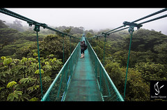 Sky walk (sachinvijayan) Tags: travel trees photography rainforest jungle ecosystem skywalk nikond4 1424mmf28